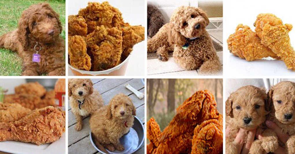 Тест: Сможете ли вы найти всех собак на этих фотографиях?