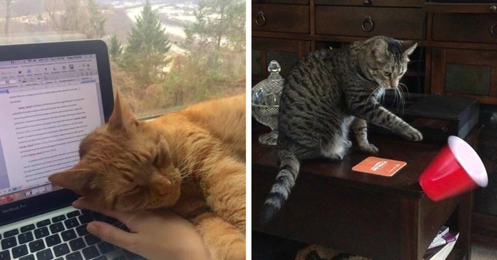 17 странных вещей, которые почему-то делают все коты