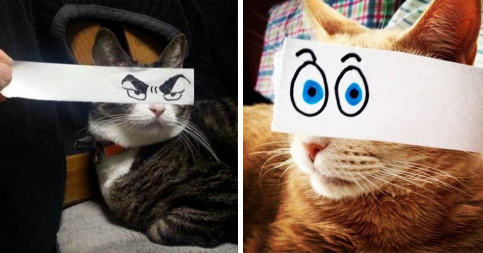15 примеров того, как можно добавить коту эмоций, а себе — настроения