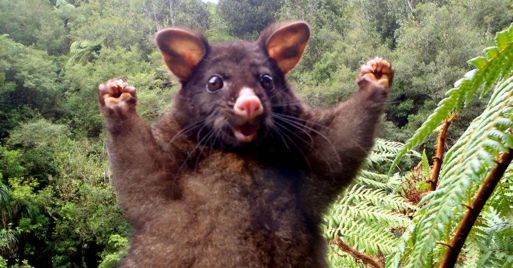 30 невероятно фотогеничных животных, от которых вы будете без ума