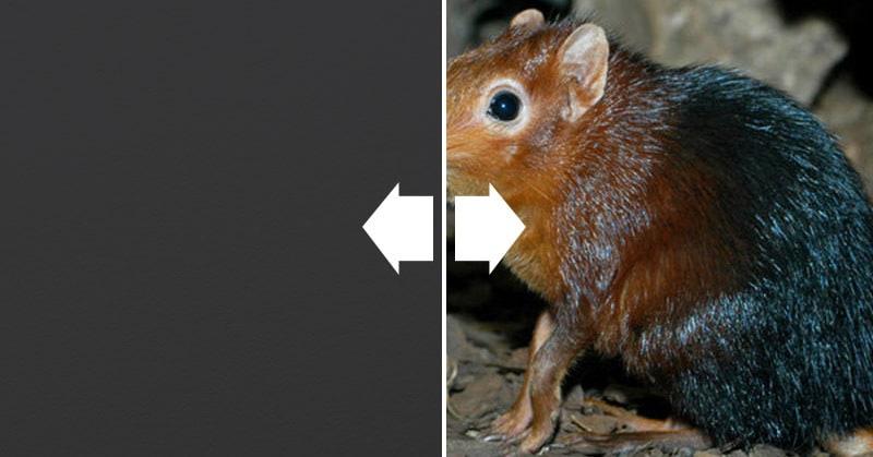 15 реально существующих животных, которые внезапно удивят своей внешностью