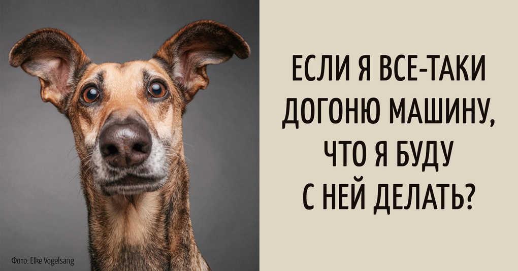15 забавных мыслей, которые наверняка посещали каждую собаку