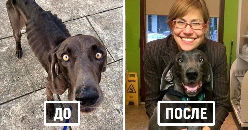 15 невероятных фотографий собак до и после спасения