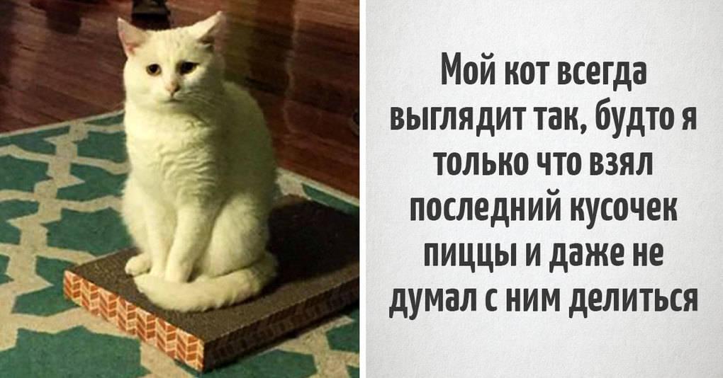 15 уморительных фотографий, которые расскажут вам все о жизни с котиками