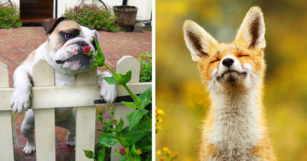 15 милых животных, которые изо всех сил ждут весну