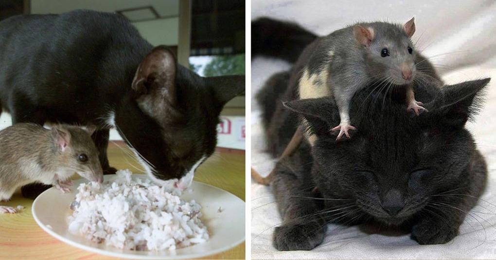 16 очаровательных фотографий, доказывающих, что дружба между котами и мышами возможна