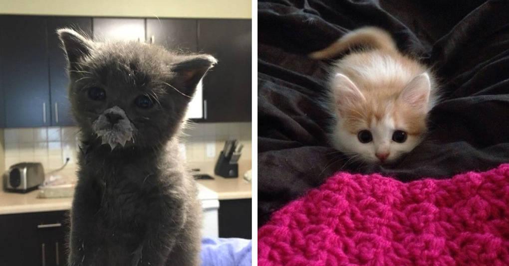 15 славных малышей, которые ещё не совсем готовы быть котами