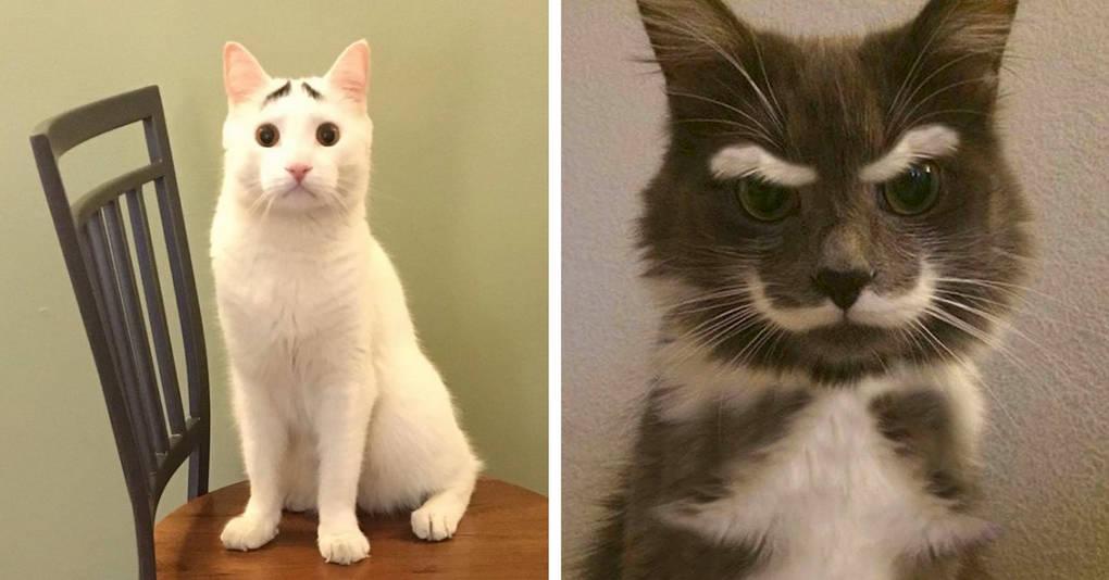 12 восхитительных котов с необычными узорами и окрасом