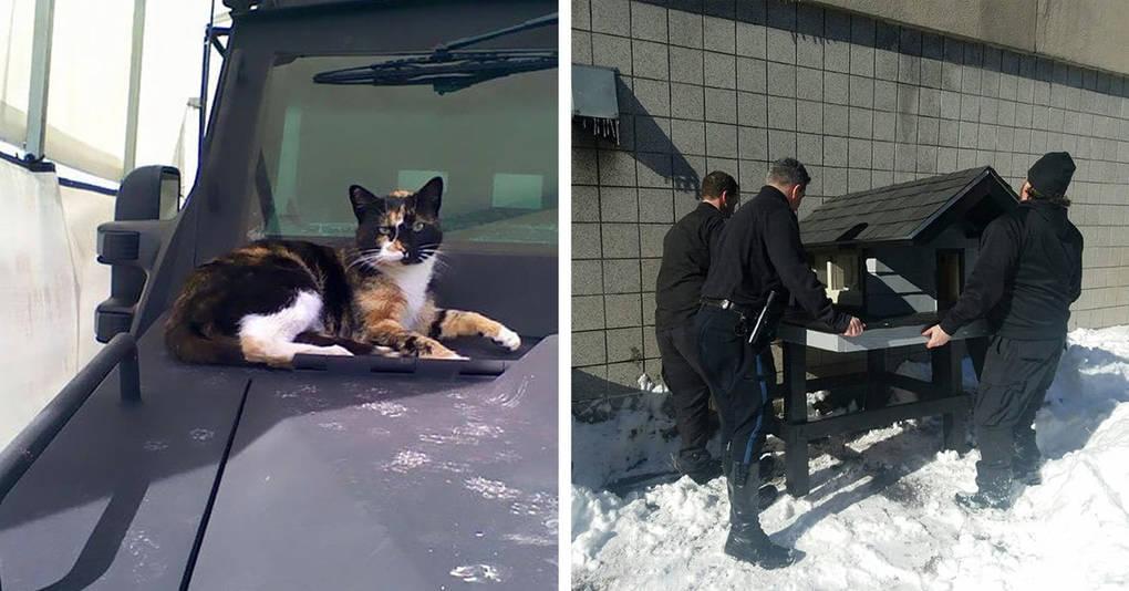 Бродячая кошка прибилась к спецназовцам, и вот что они с ней сделали