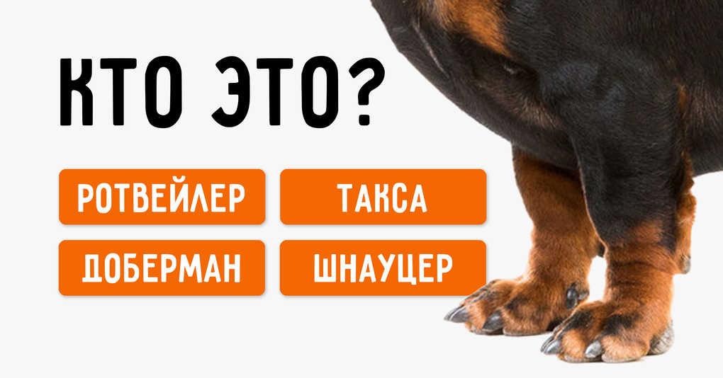 Тест: Сможете ли вы угадать породу собак по лапам?