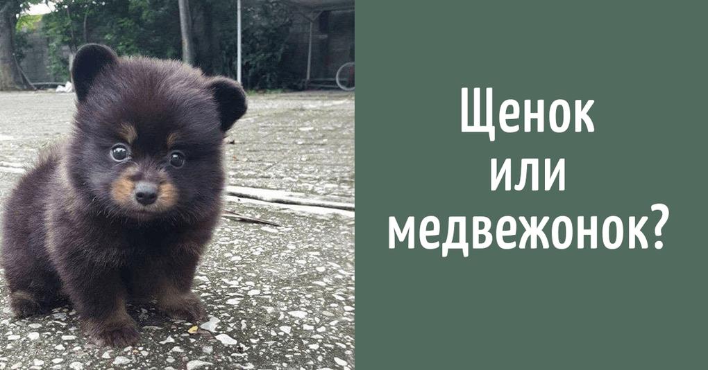 Кто же этот малыш: щенок или медвежонок?