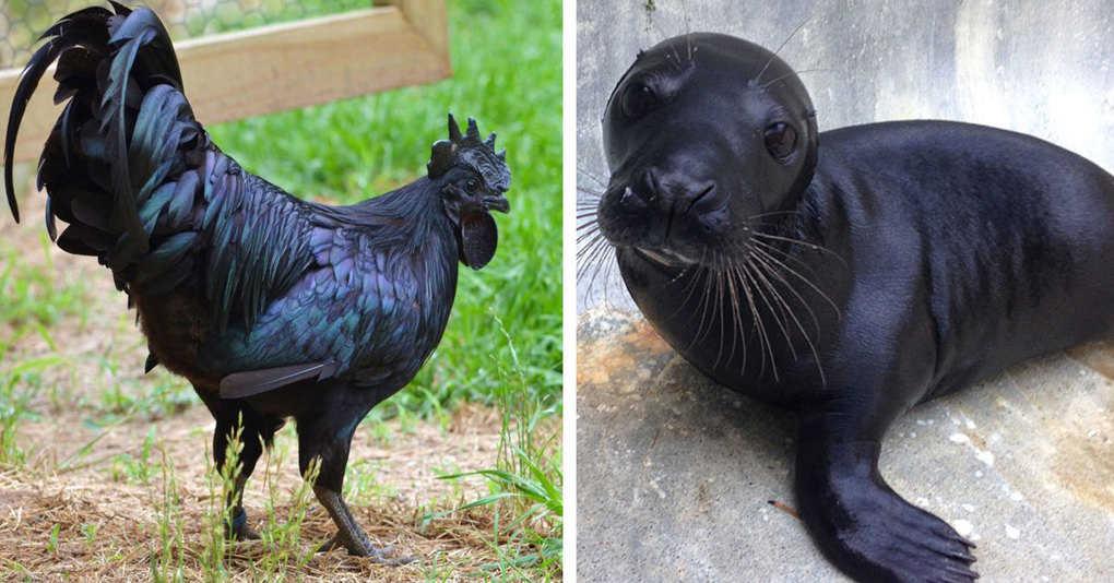 15 чёрных животных, в реальность которых сложно поверить