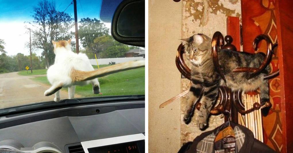 20 фотографий, которые докажут, что коту везде найдется место