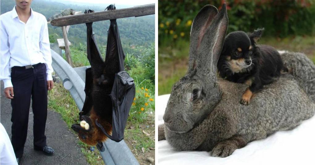 10 животных-гигантов, которые переросли все положенные природой нормы