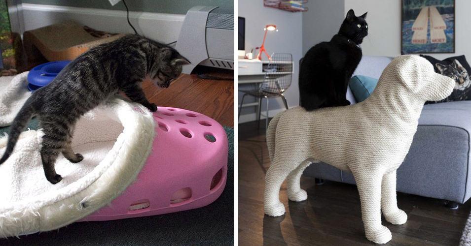 15 самых странных и необычных приспособлений, созданных для кота