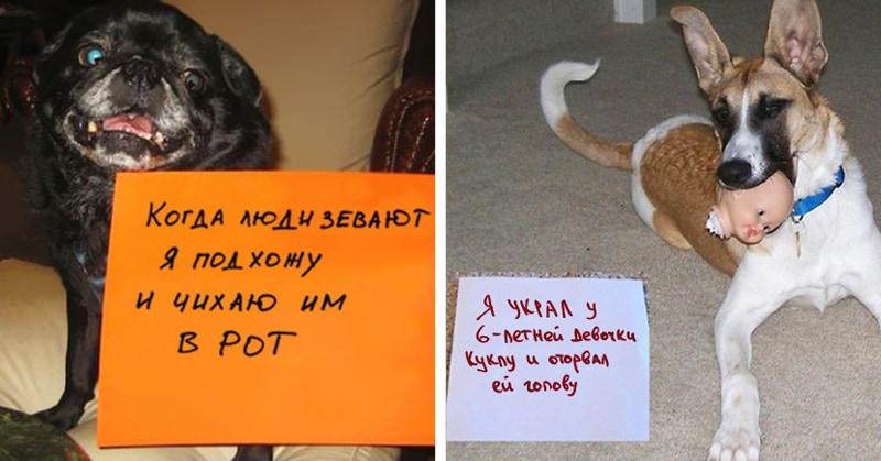 20 провинившихся собак, которым ну очень стыдно