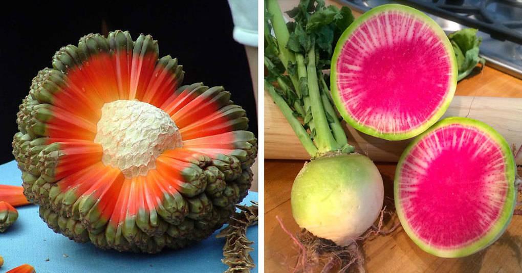 25 экзотических фруктов и овощей, которых не найдёшь в обычных супермаркетах
