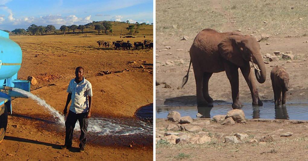 Кениец каждый день в одиночку спасает множество животных от гибели