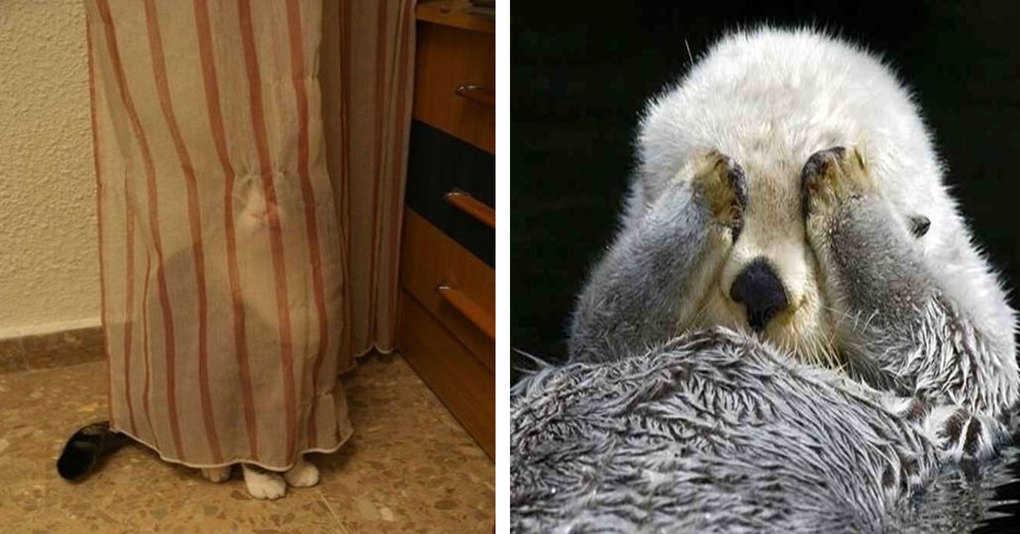 17 животных, которые пытались спрятаться, но что-то пошло не так