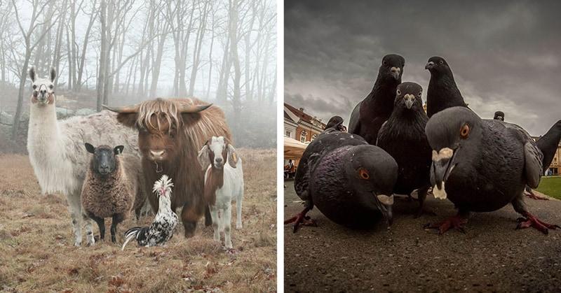 20 фото животных, как будто созданных для обложки музыкального альбома
