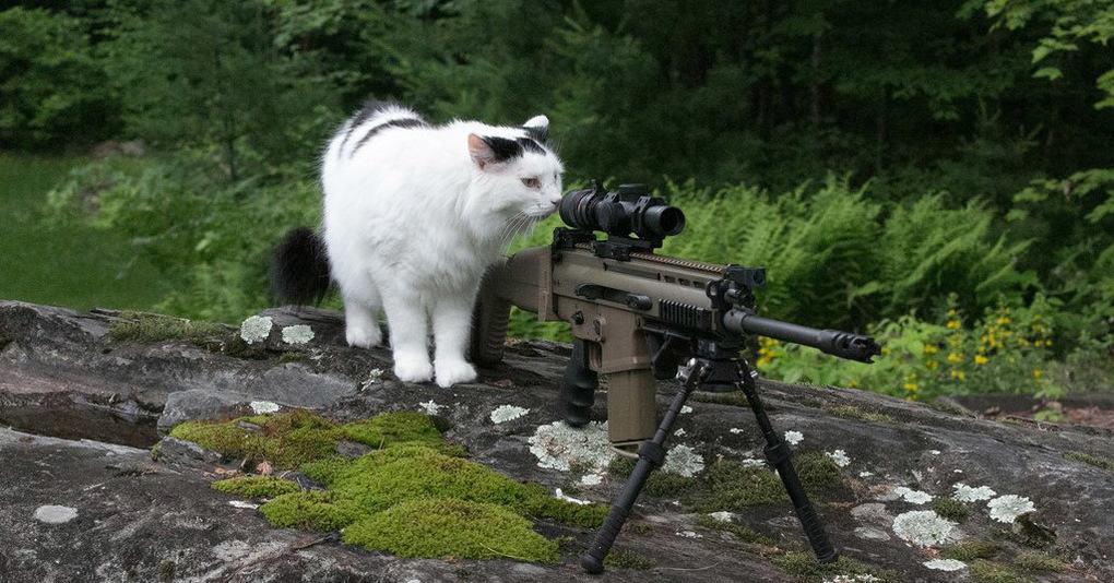 15 фотографий животных, сделанных в самый подходящий момент