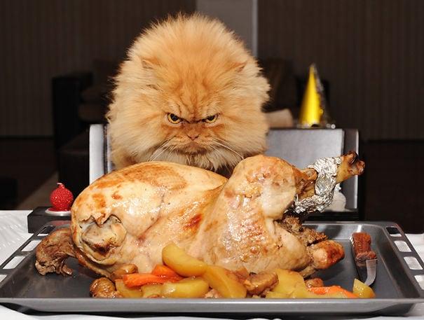 cat thief funny animal pictures 66  605 1 - 15 невероятно целеустремленных котов, которые готовы на всё во имя еды