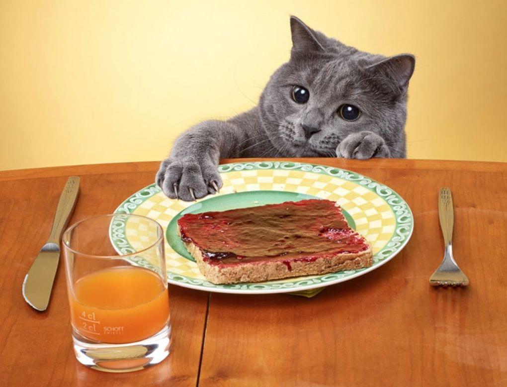 february 08 2014 04 00 41 yy - 15 невероятно целеустремленных котов, которые готовы на всё во имя еды