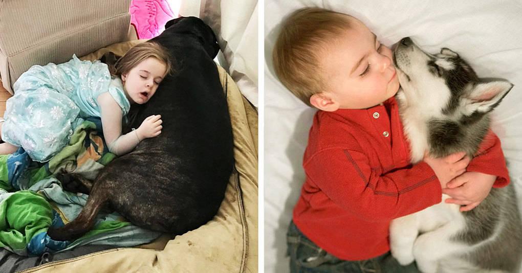 25 умилительных фотографий, которые доказывают, что собаки — лучшие подушки