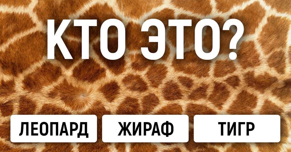 Тест: Сможете ли вы угадать животное по узору?