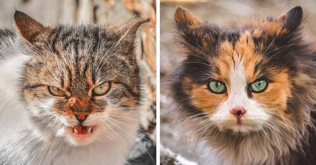 Пронзительные портреты бродячих котов, которые тронут ваше сердце
