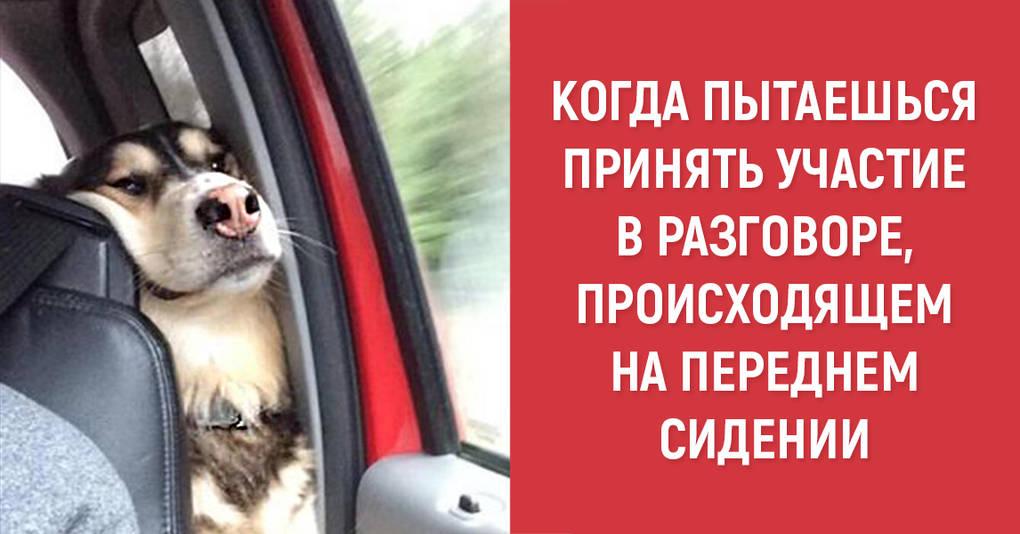 18 колоритных собак, в которых вы с легкостью узнаете себя
