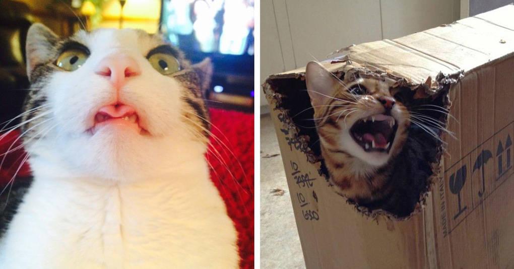 17 фотографий, доказывающих, что коты — прекрасные, но очень странные создания