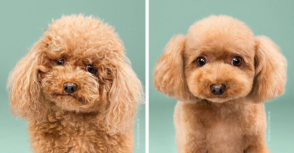 15 очаровательных собачек до и после стрижки