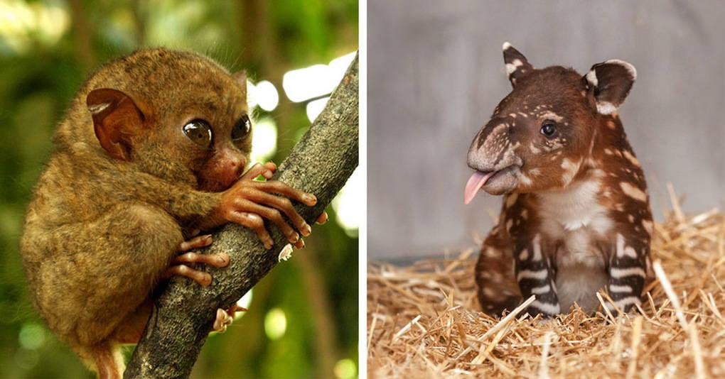 20 очаровательных детенышей животных, которых вы никогда не видели