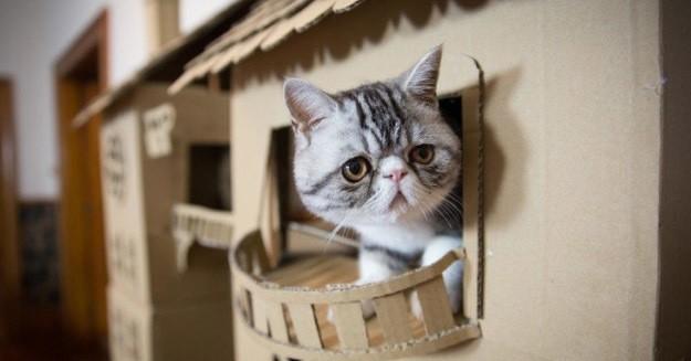 Девушка построила для своего котенка целый дворец, и вот как он отреагировал на это