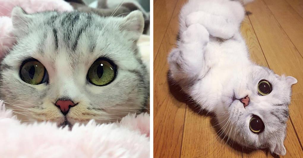 Эта очаровательная кошечка стала звездой благодаря своим невероятным глазам