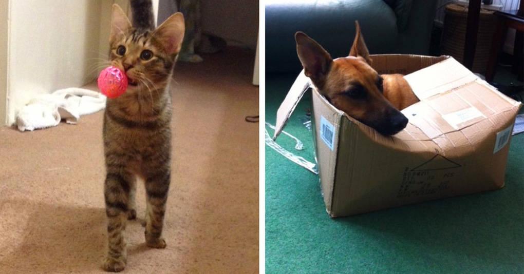 16 забавнейших фотографий, на которых коты и собаки забыли, кто из них кто