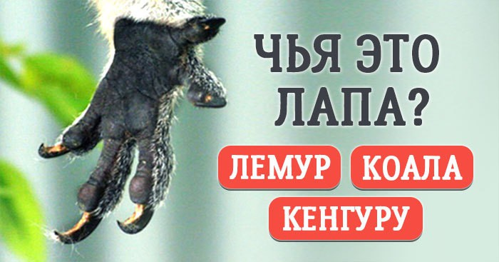 Тест: Угадайте животное по лапам