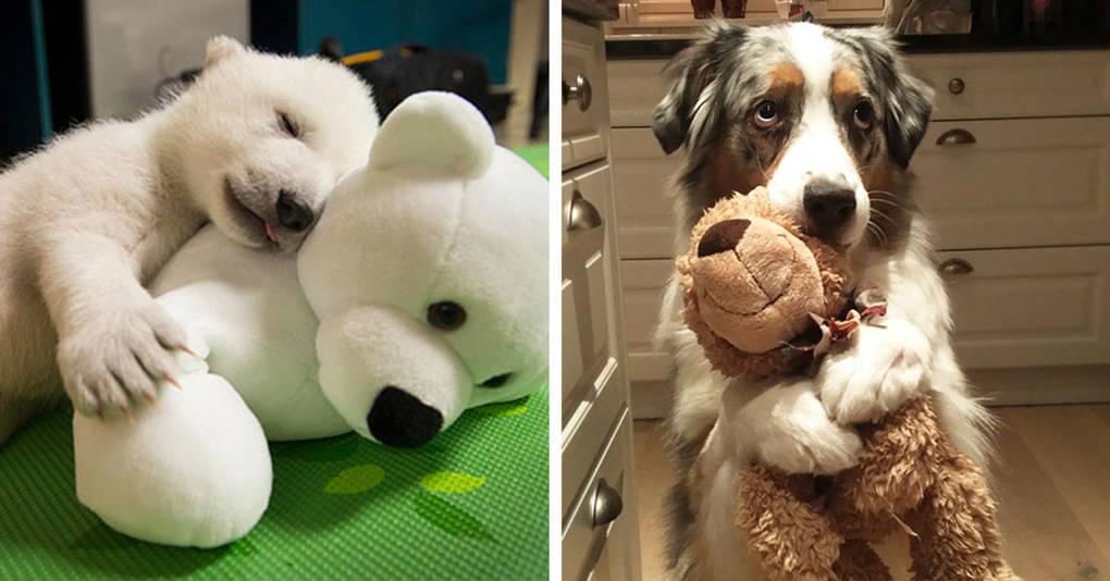 20 очаровательных фотографий животных с их любимыми мягкими игрушками
