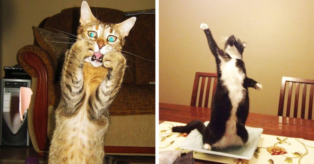 30 драматичных котов, которым нужно дать «Оскар»