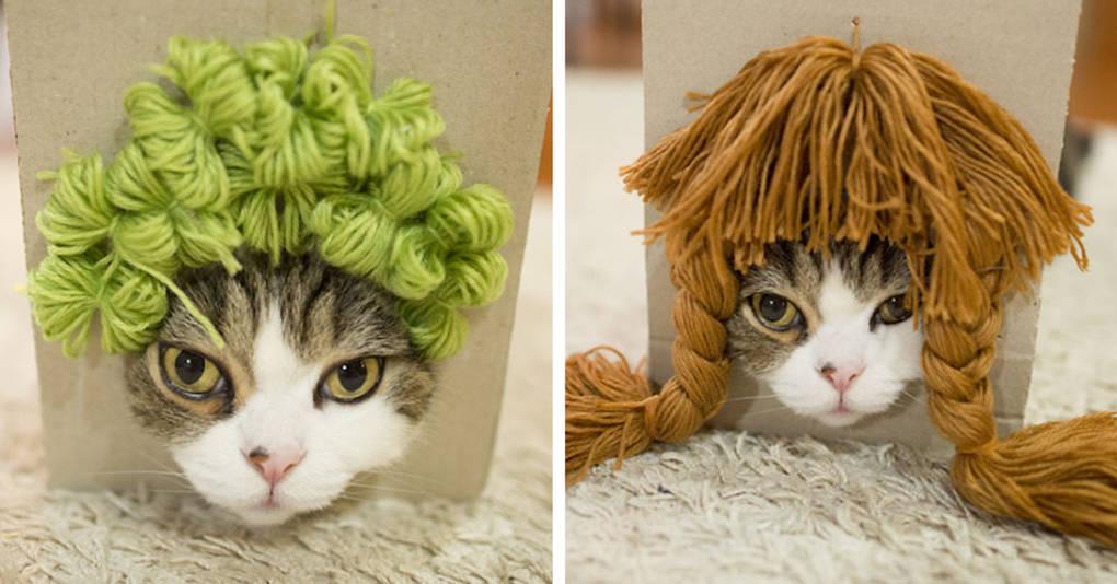 Что делать, если ваш кот любит коробки, а вы — шутить