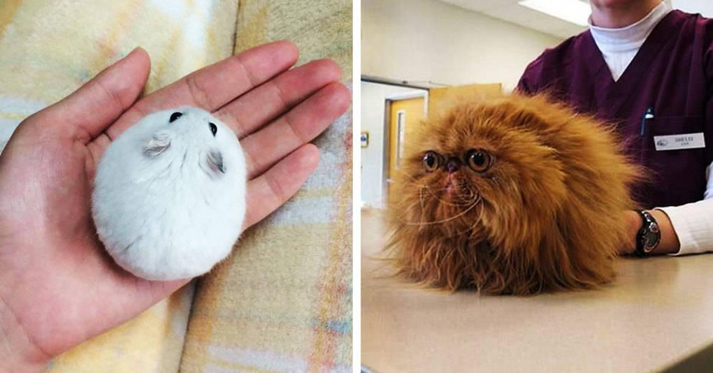25 невероятно круглых животных, которые закатятся прямо в ваше сердце