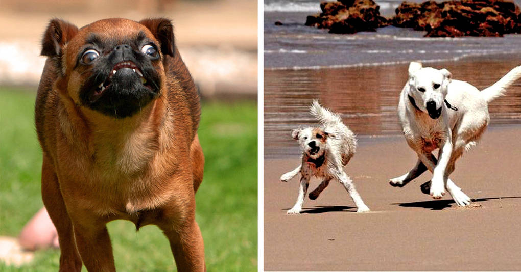 15 бегущих собак, которые поразят вас своей грацией