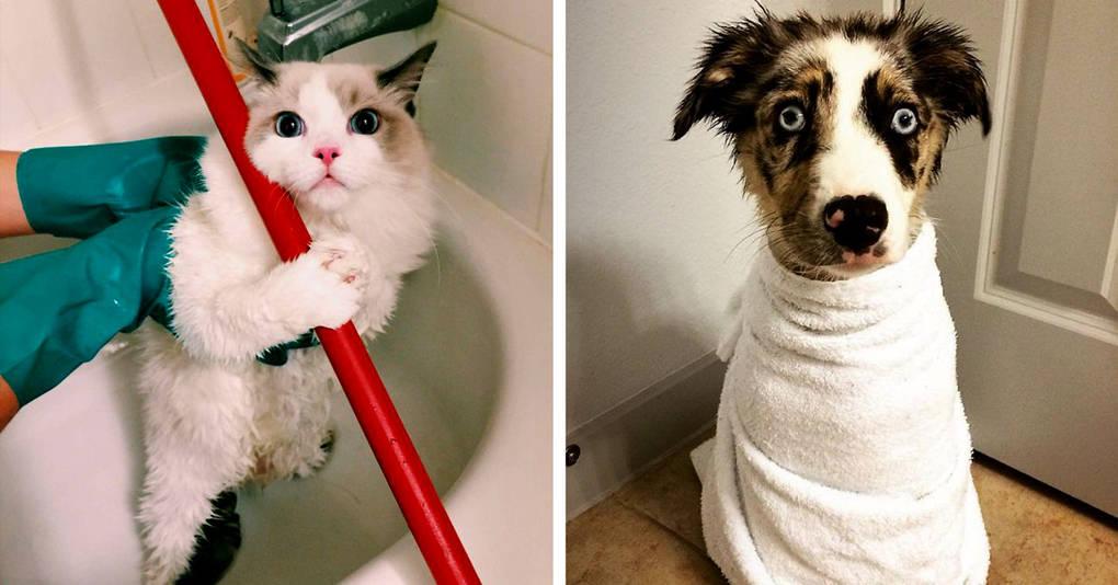 17 животных, которые совсем не хотели принимать ванну