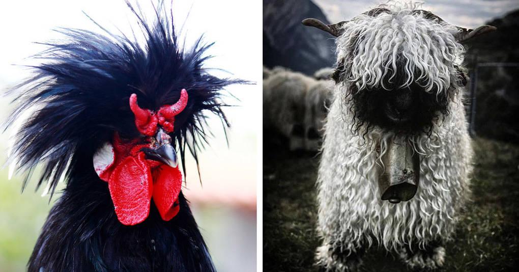 18 брутальных животных, которые выглядят как звезды тяжелого рока
