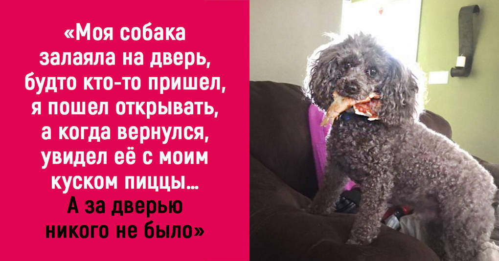 20 «собачьих случаев», над которыми невозможно не смеяться