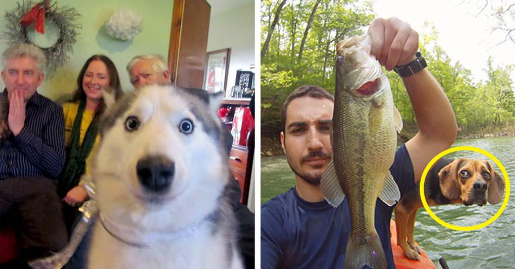 25 уморительных фотографий на которых неожиданно появилась собака