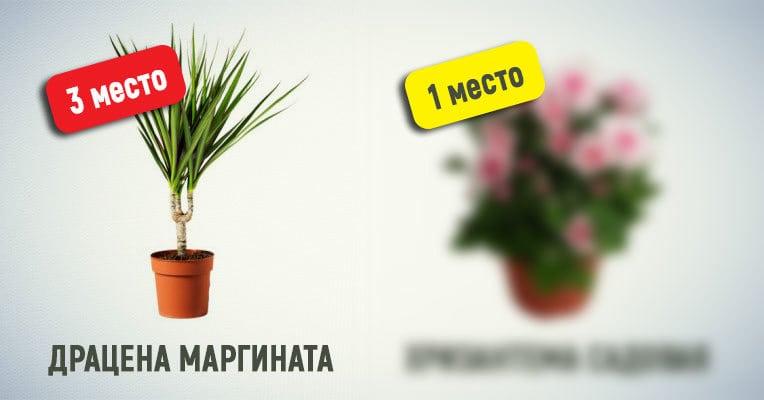 Ученые составили список комнатных растений, которые очищают воздух лучше остальных