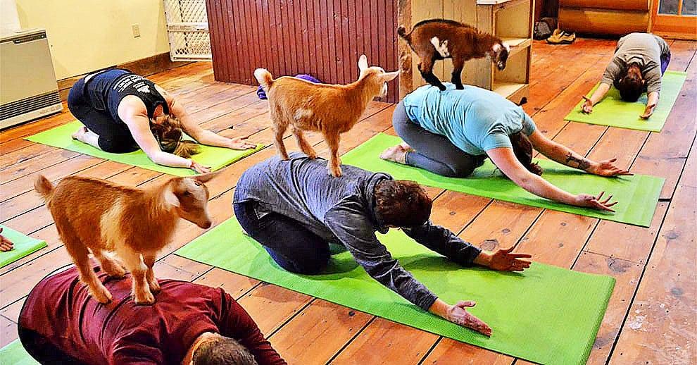 Этот инструктор по йоге решил разнообразить занятия таким необычным образом