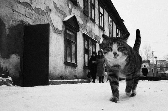 Фотограф из Казахстана показывает нам тайный мир бродячих кошек